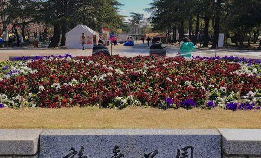 3月の会合 & お花見観察会 [2019/3/24]